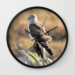Sunlit Profile of a Northern Harrier Hawk on Driftwood Wall Clock