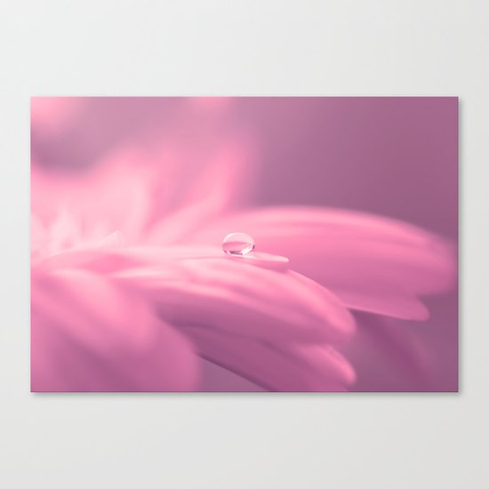 Lonely droplet pink daisy flower  - Floral on #Society6 Canvas Print