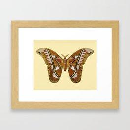 Butterfly Painting Framed Art Print