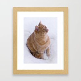 Kitten Discovers Snow! Framed Art Print