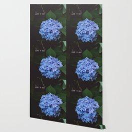 Blue Hydrangeas Wallpaper