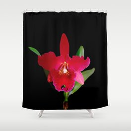 Red Cattleya orchid flower Shower Curtain