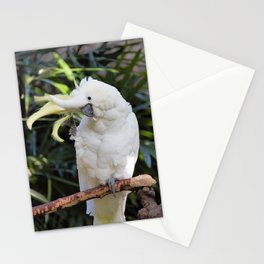 Sulfur-Crested Cockatoo Salutes the Photographer Stationery Cards