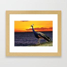 Peacock Ocean Framed Art Print