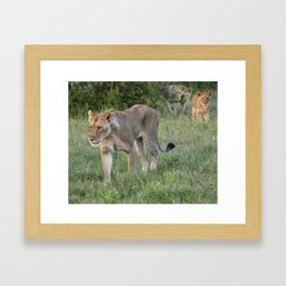 Lion Mama & Cubs Framed Art Print
