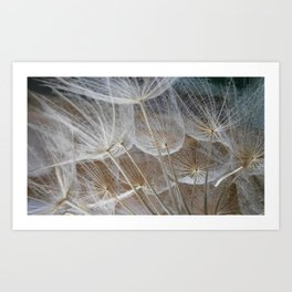 Fragile nature Art Print