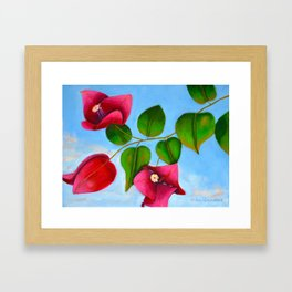 Bougainvilleas on a Sunny Day Framed Art Print