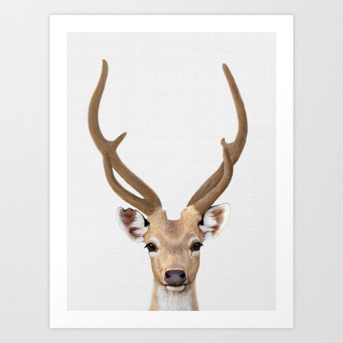 Deer Print Art Animal Prints Nursery Decor Animals