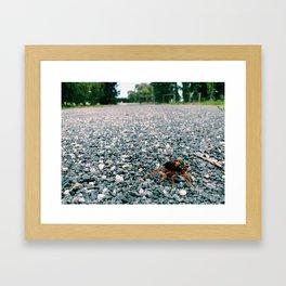 Bug on the Gravel Framed Art Print