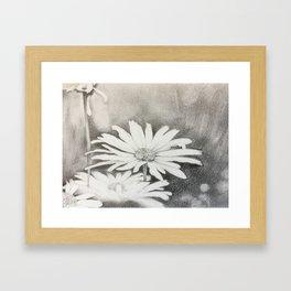 chamomiles Framed Art Print