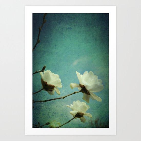 White Magnolias Art Print