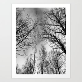 Black and White Canopy Art Print