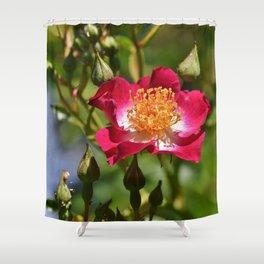 Anemone Florets Blossom Shower Curtain