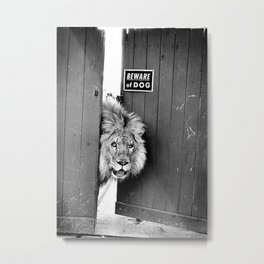 Beware of Dog black and white photograph of attack lion humorous black and white photography Metal Print