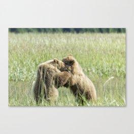 Brown Bear Cubs - Wrestling Match Canvas Print