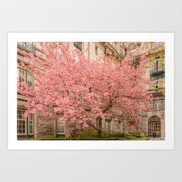 Brookline in bloom Art Print