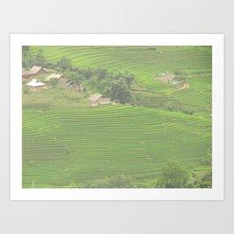 Sapa Rice Fields Art Print