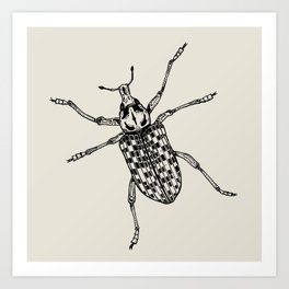 Botany Bay Weevil Art Print