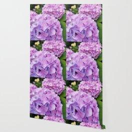 Hydrangea 1 Wallpaper