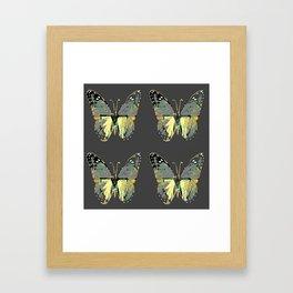 CHARCOAL GREY WESTERN STYLE BUTTERFLIES Framed Art Print