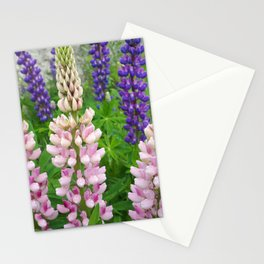 Lupins Stationery Cards