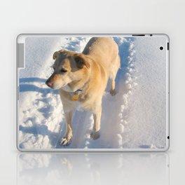 Dogs | Dog | Waiting Dog | Golden Lab Laptop & iPad Skin