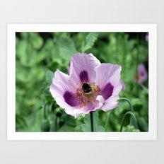 Poppy and Bee Art Print