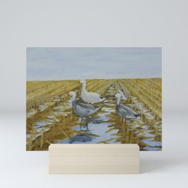 Snow Geese in the Corn Field Mini Art Print