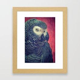 Gray Parrot Framed Art Print