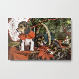 Naughty Beagle Puppies Nibbling on Christmas Decorations Metal Print