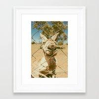 kangaroo Framed Art Prints featuring Kangaroo by Ellenor Argyropoulos