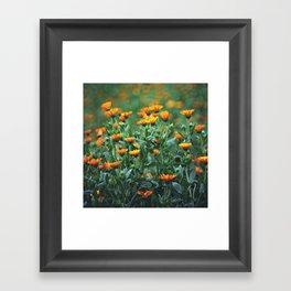 Orange Flowers #1 Framed Art Print