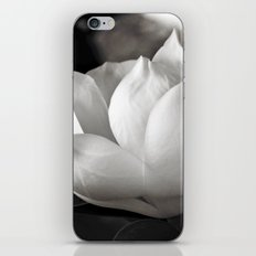 Magnolia Grandiflora Blossom iPhone & iPod Skin