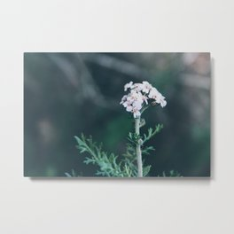 Flower Photography by Siora Photography Metal Print