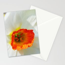 White Petals Stationery Cards