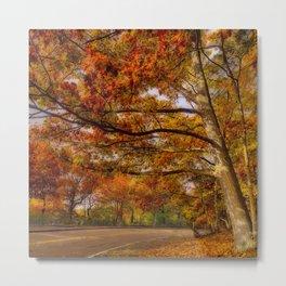 Fall Road,Chestnut Hill, Massachusetts Metal Print