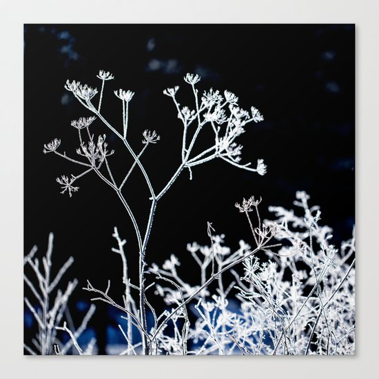 Frosted plant at cold winter day on black background Canvas Print