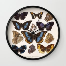 Vintage Scientific Insect Butterfly Moth Biological Hand Drawn Species Art Illustration Wall Clock