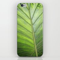 palm iPhone & iPod Skins featuring Palm by ALLY COXON