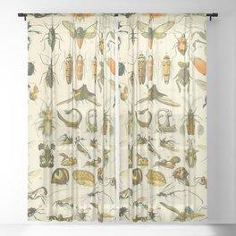 "Adolphe Millot ""Insectes"" Nouveau Larousse 1905 Sheer Curtain"
