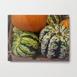 Green Gordgeous Gourds Metal Print