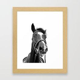 Horse Photo   Black and White Framed Art Print