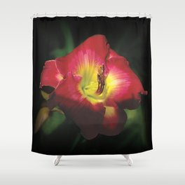Glorious red daylily Joan Derifield Shower Curtain