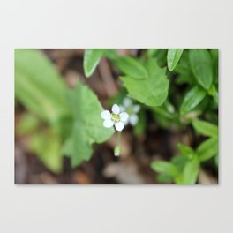 Tiny White Wildflower Canvas Print