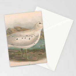 022 Giant Petrel macronectes gigantea4 Stationery Cards