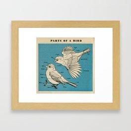 Parts of a Bird Framed Art Print