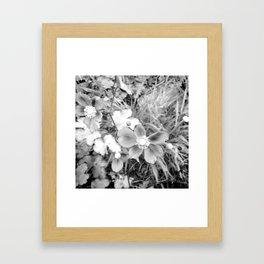Japanese anemones - infrared Framed Art Print