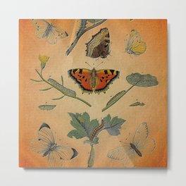 Caterpillars & Butterflies on Orange Metal Print
