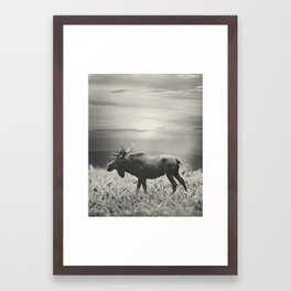 Moose Walk  Framed Art Print