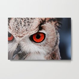 Eyes of owl Metal Print